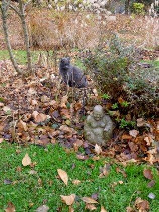 Maggi Rhudy Cat and Buddha