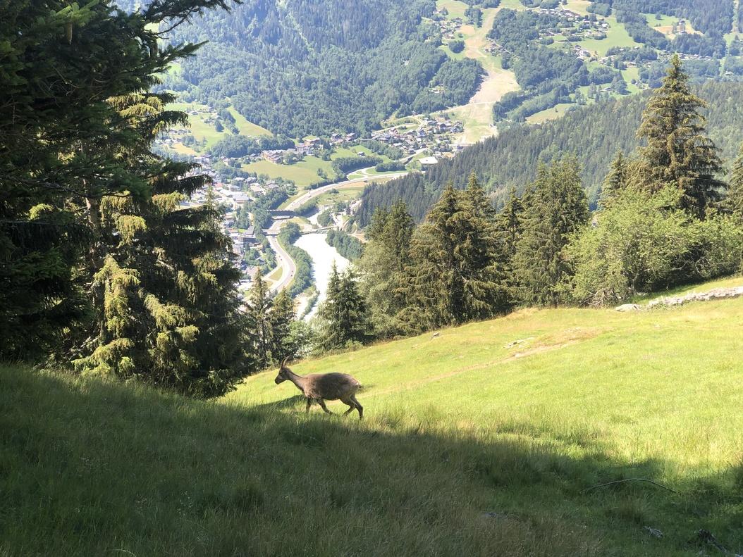 Parc du Merlet - Les Houches - image 20