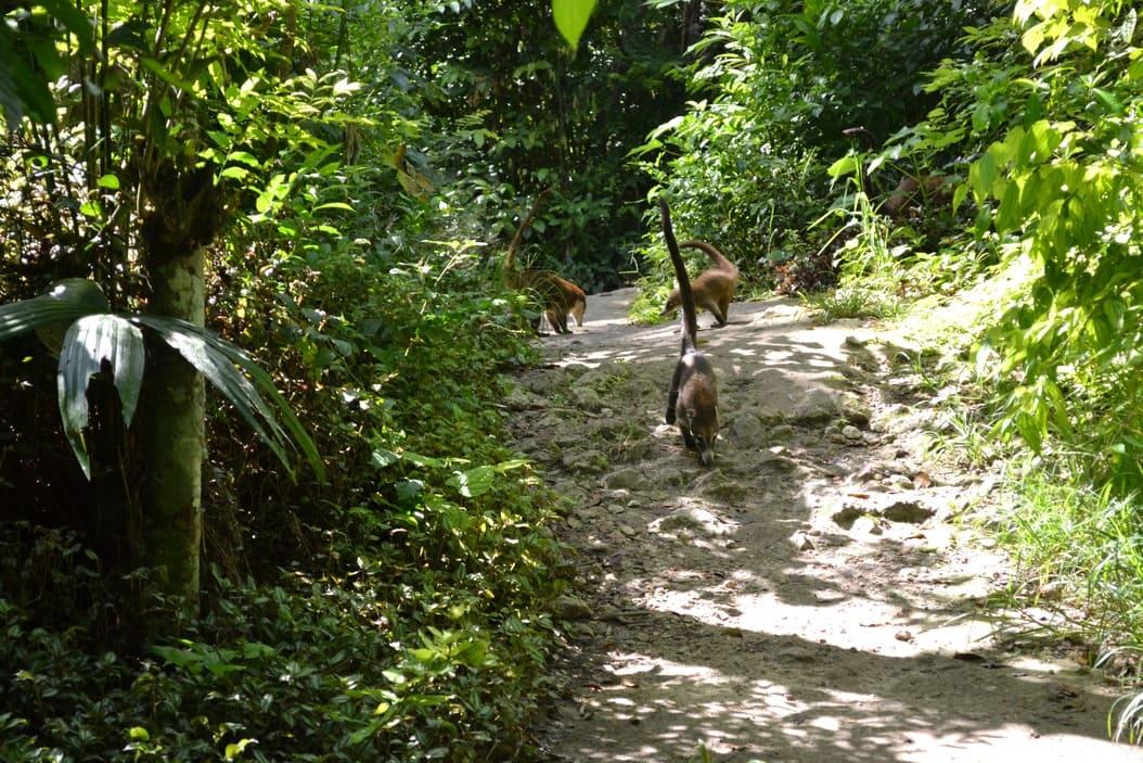 Tikal - guatemala 13