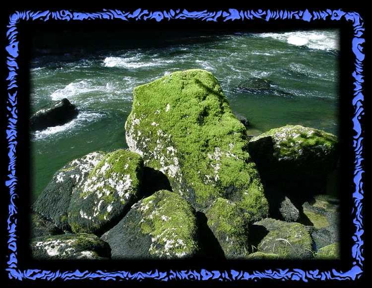 Moosbewachsene Steine am Saut du Doubs