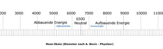 Boviseinheiten Skala