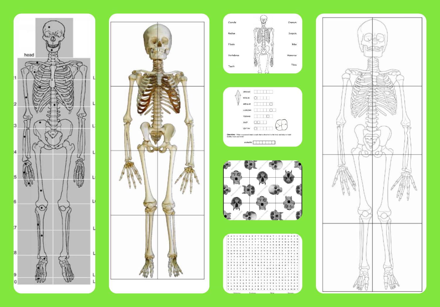 Free Printable Life Sized Child And Adult Skeletons Skull