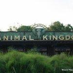 Lion Guard Adventure Roars into Disney's Animal Kingdom February 7