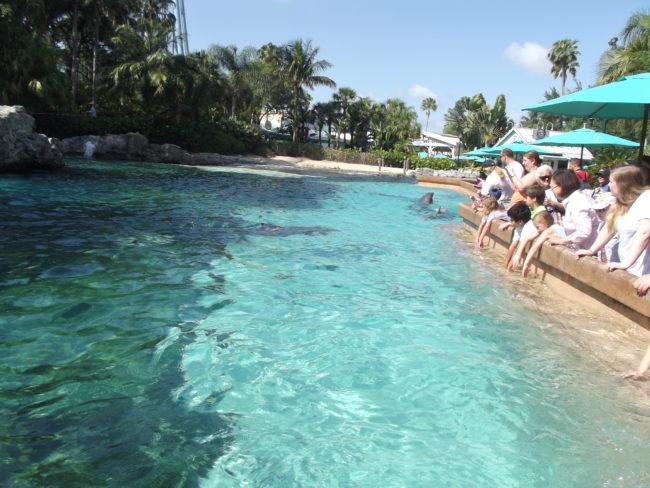 Sea World Dolphin Cove
