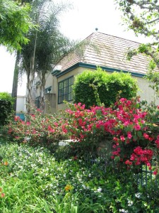 Palm trees, flowering bushes at the Candy Cane Inn