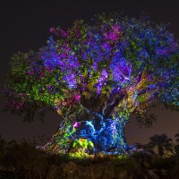 Update: Disney's Animal Kingdom After Dark