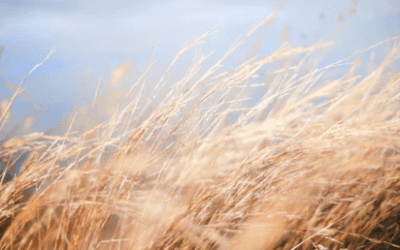 Practical Instruction: Directing the Wind