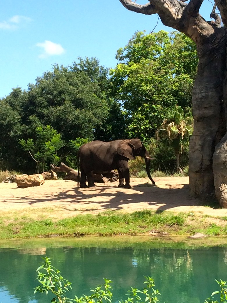 Photo of an elephant at Disney's Animal Kingdom