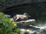 A favourite basking spot
