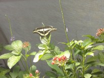 Butterfly exhibition_Natural History Museum_18