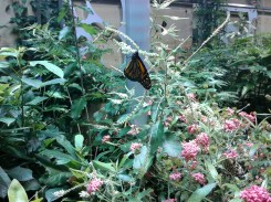 Butterfly exhibition_Natural History Museum_9
