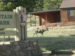 Rocky Mountain National Park_deer_16