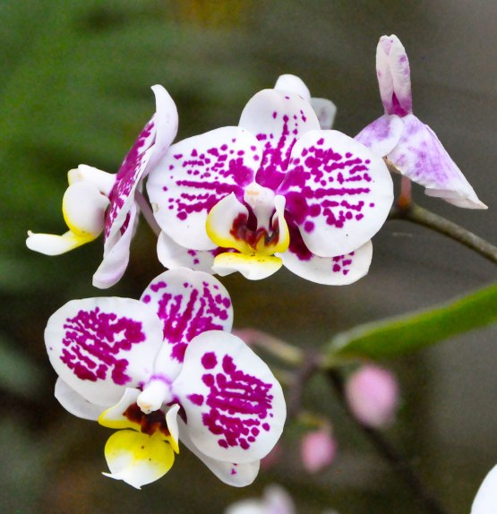 Botanical Gardens-0146