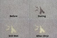 bleach stains in carpet | www.cintronbeveragegroup.com