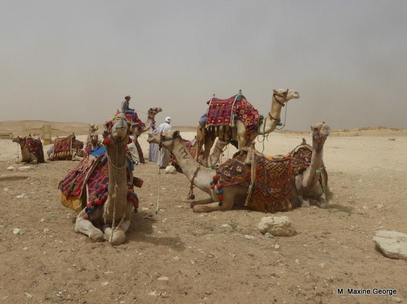 Egypt cairo camel ride