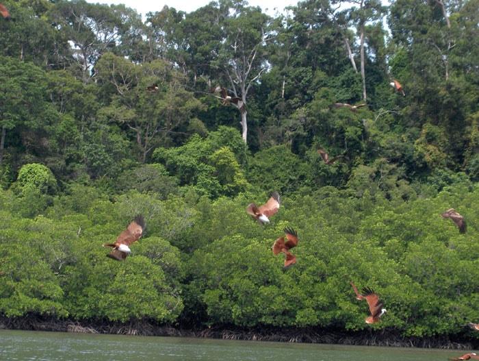 Langkawi Island Malaysia eagles