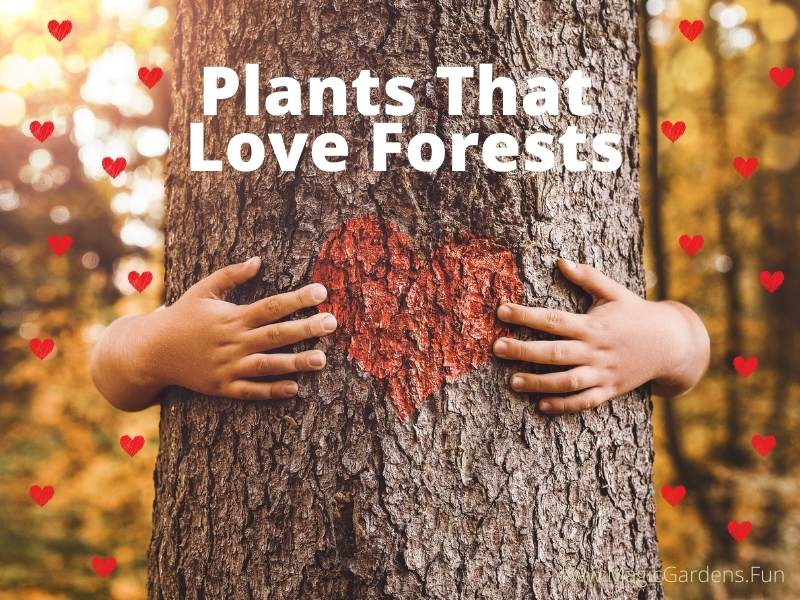 Child hugging a tree and the words plants that love forests
