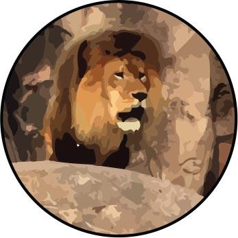animal kingdom insider tips