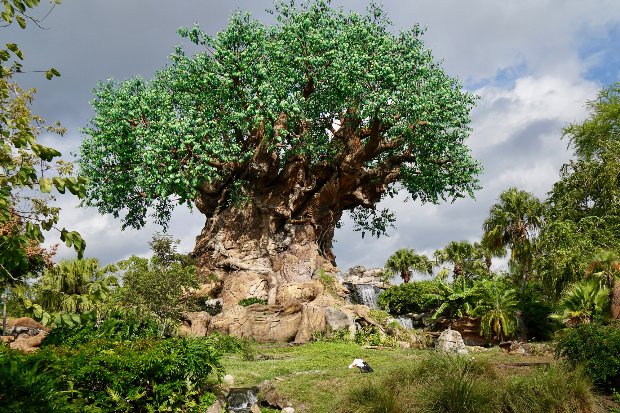 Animal Kingdom Rides and Attractions