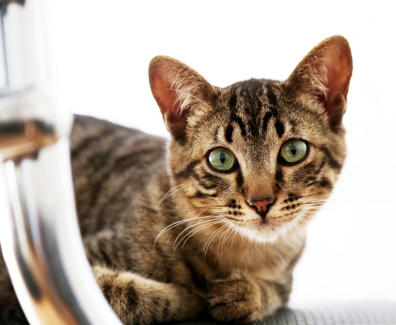 cats at disney world