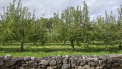Breezy Hill Orchard, Staatsburg, NY