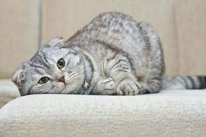 Mlada crvenokosa maca
