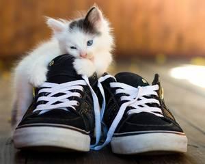 Сонник кошачьи экскременты к чему снится кошачьи экскременты во сне. К чему снится, если нагадил кот или кошка: значение по сонникам