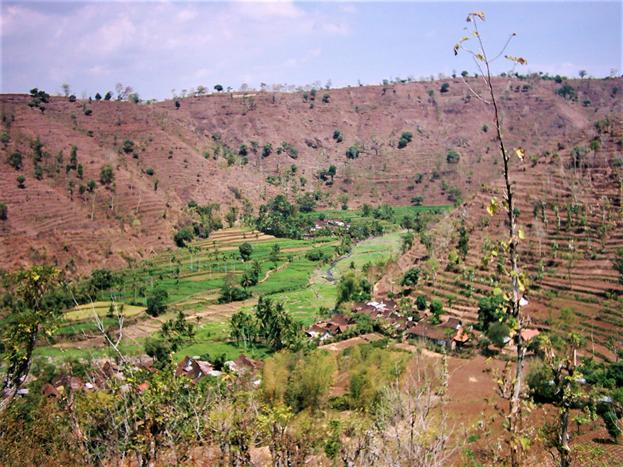 Menanam pohon menyelamatkan manusia dan lingkungan
