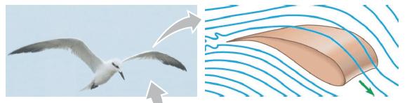 Prinsip sayap pesawat terbang
