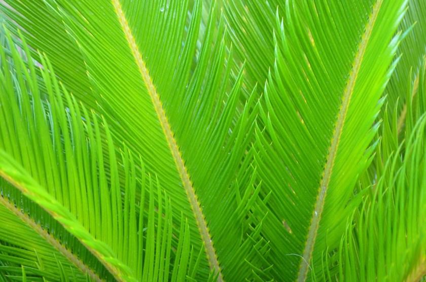 Perkembangbiakan Tumbuhan Gymnospermae (Materi IPA Kelas 9)