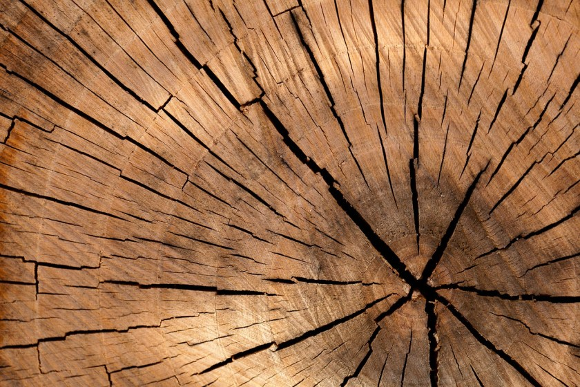 Struktur dan Fungsi Jaringan Tumbuhan (IPA Kelas 8)