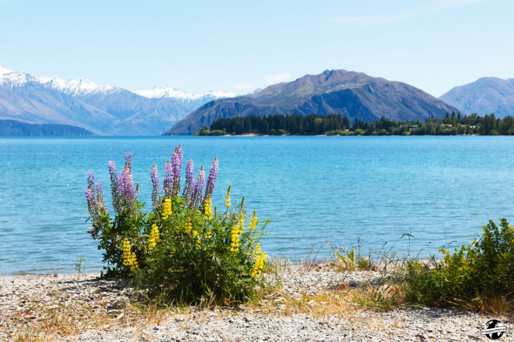 lac Wanaka road trip nouvelle zelande