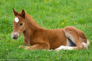 Even if you disagree, this foal thinks I'm hilarious.