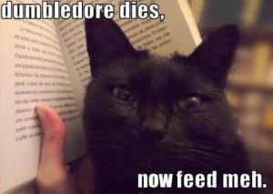 Instead, I had a cat.