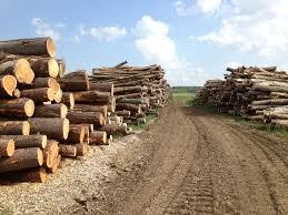 lemn-forestier