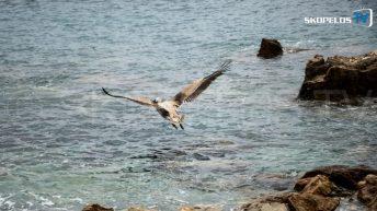 Pelican 4 Skopelos TV 5