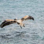 Pelican 4 Skopelos TV 6