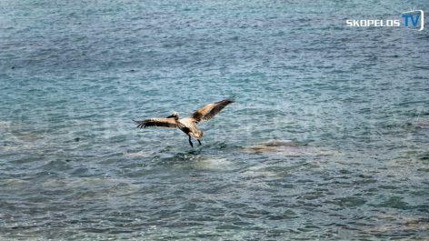 Pelican 4 Skopelos TV 7