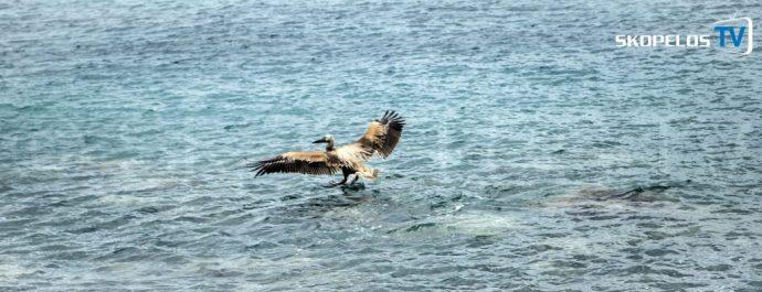 Pelican 4 Skopelos TV 8