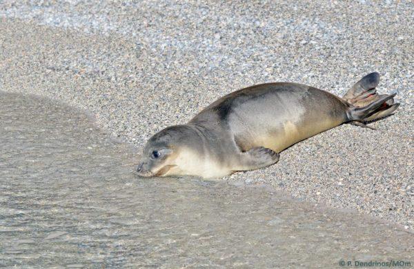 MOm Εθνικό Θαλάσσιο Πάρκο Αλονnήσου (1)