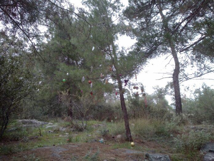 Στόλισαν δέντρο στη Γορίτσα!
