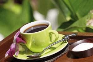 gruener-kaffee-kaufen-hajoona-schweiz