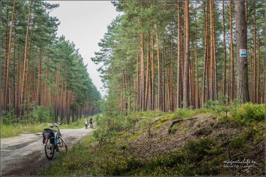 trasa rowerowa wpobliżu Józefowa