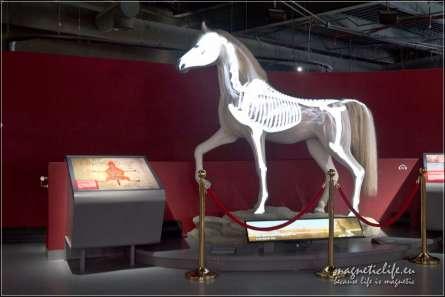 Kościec konia