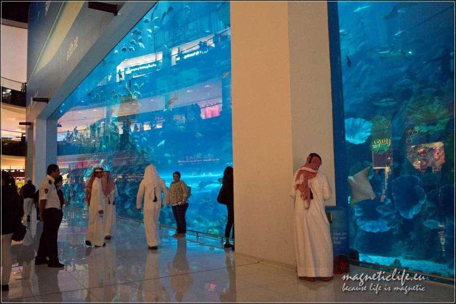 Dubaj Mall akwarium
