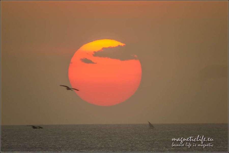 Ptak izachód słońca
