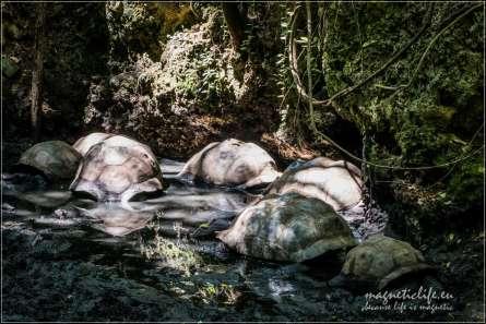 Żółwie olbrzymie Miejsce lęgowe
