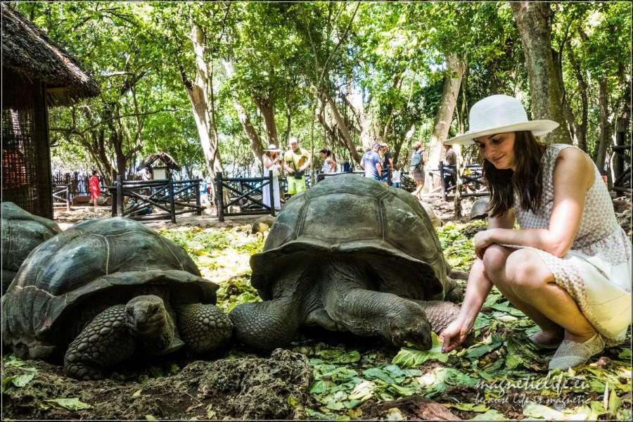 Pora karmienia żółwi