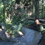 Hikes and Rambles: Redwood Grove Nature Preserve (Los Altos)