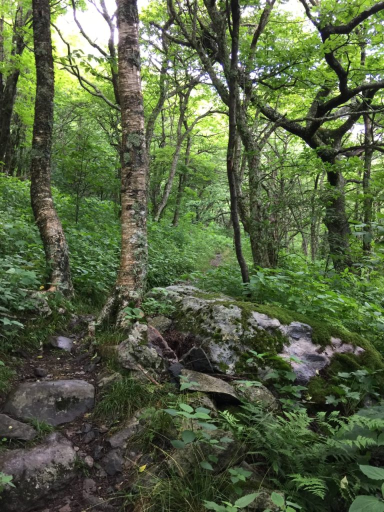 Appalachian Trail in Summer